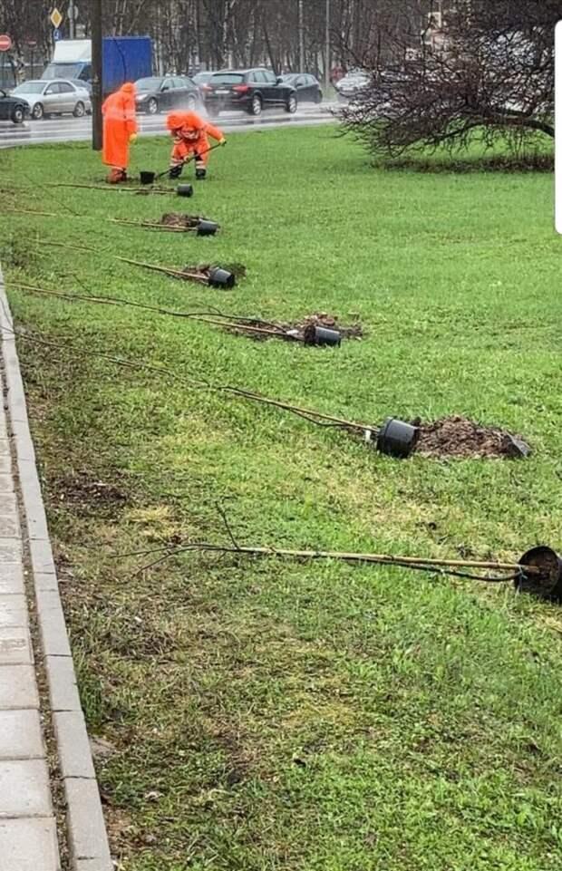 Вдоль Алтуфьевки в Лианозове высадили деревья и кусты