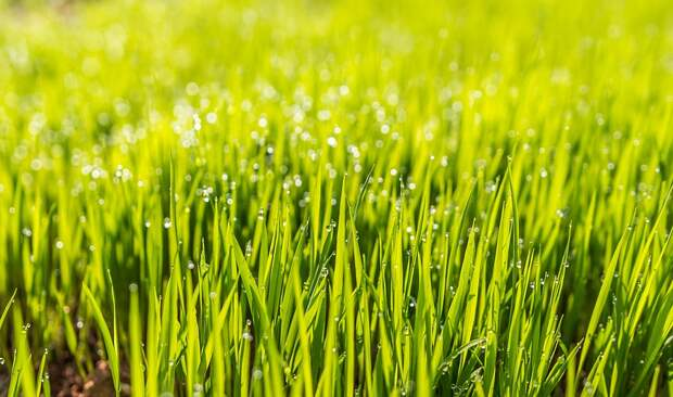 Между клубами на 2-м Южнопортовом посеяли траву