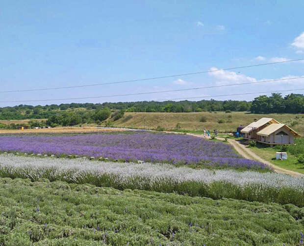 Где живут ароматы: экскурсия на ферму «Лавандовый замок» под Бахчисараем