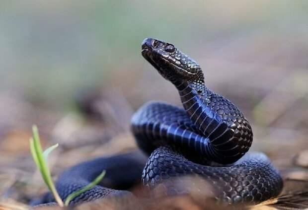 Змеиный яд поможет: новый метод борьбы против COVID-19
