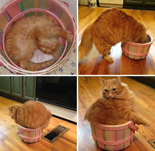 Хозяева рассказали, что его принесли домой котенком именно в этой коробке. Они воссоединились! животные, забавно, котопост, коты, кошки, неожиданно, питомцы, юмор