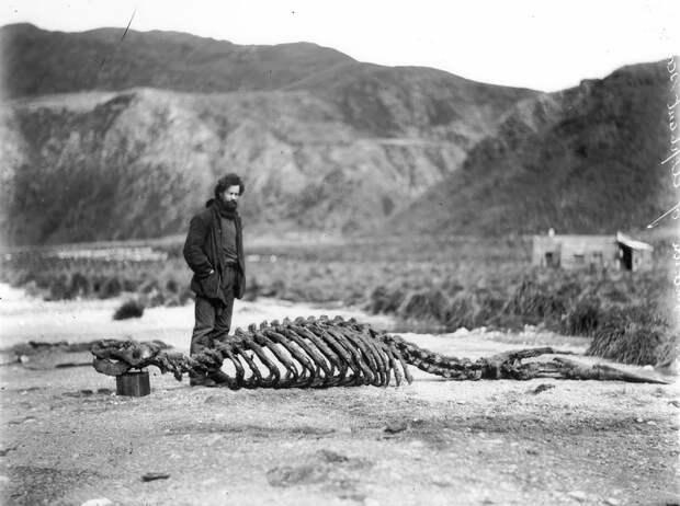 Первая Австралийская антарктическая экспедиция в фотографиях Фрэнка Хёрли 1911-1914 61