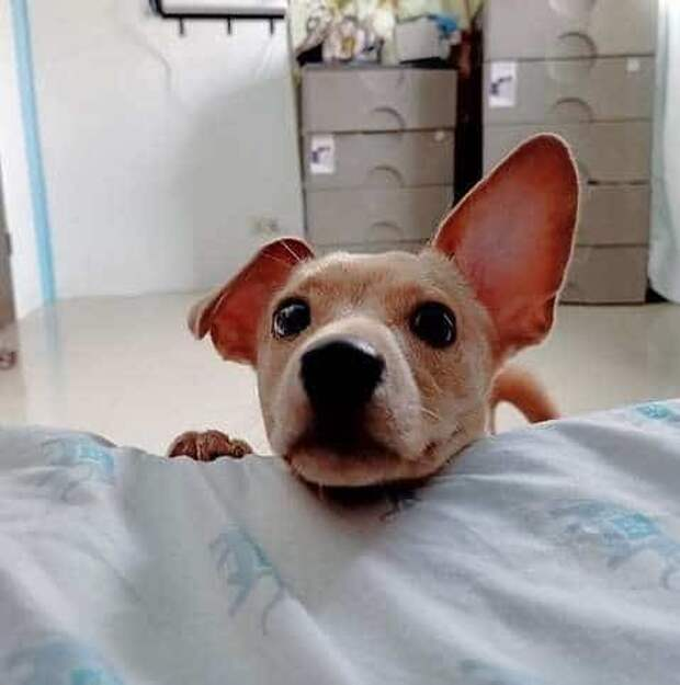 пёс  у кровати