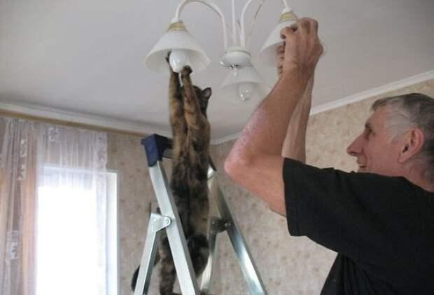 8. Сколько котов нужно для того, чтобы заменить лампочку? домашний питомец, животные, забавно, кот, котики, прикол