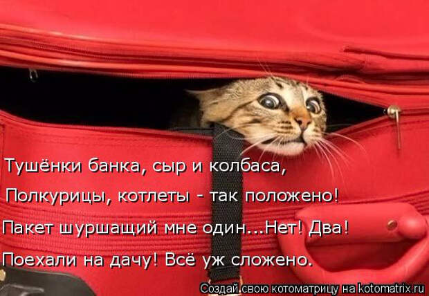 kotomatritsa_K (600x415, 222Kb)
