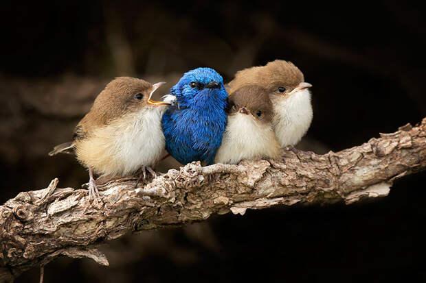 Эти птички умеют обниматься!
