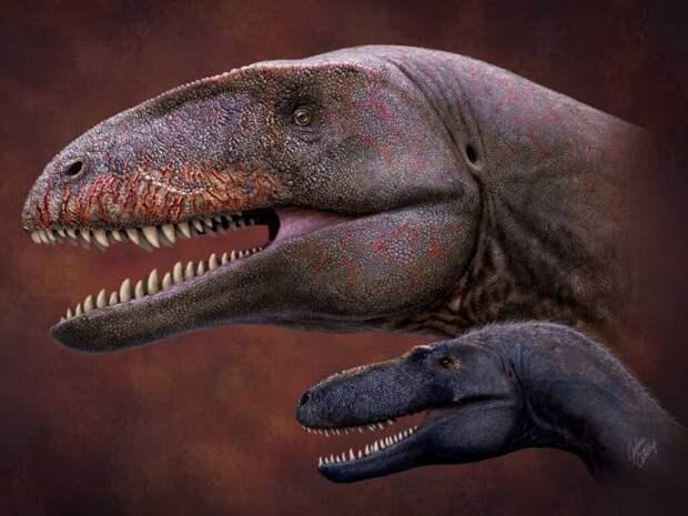 В Узбекистане обнаружили новый вид динозавров с «акульими» зубами