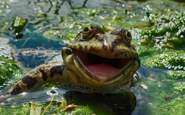 16 снимков финалистов конкурса на самое смешное фото животных. Нереальный позитив!