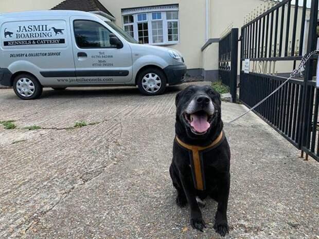 Люди нашли брошенную пожилую собаку с бессердечной запиской