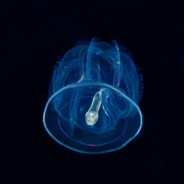 Класс кишечнодышащие морских животных типа полухордовыхКласс кишечнодышащие морских животных типа полухордовых