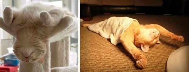 Примеры наглой симуляции от Котеек коты, кошки, симулянты