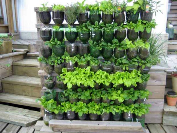 Вертикальная стена зелени. | Фото: Самоцветик.
