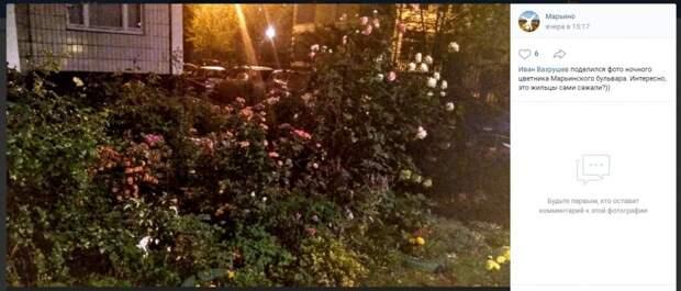 Фото дня: роскошный цветник на Марьинском
