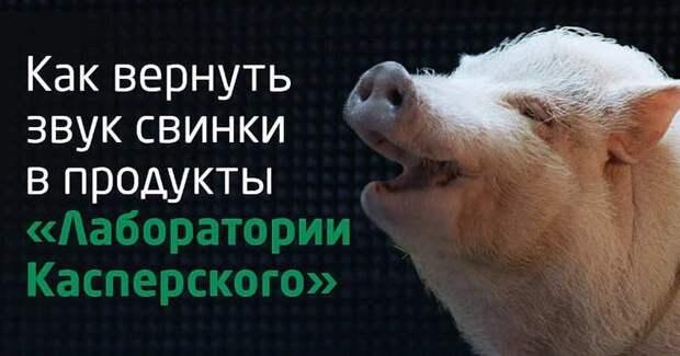 При создании звука обнаружения вируса в антивирусе Касперского использовали настоящую свинью. информация, картинки, факты