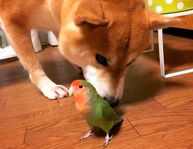 Как попугай заставил всех себя уважать