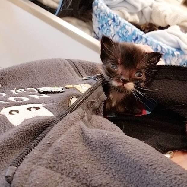 «Он размером с кекс!» История о котёнке с мордочкой-бантиком, который не растёт