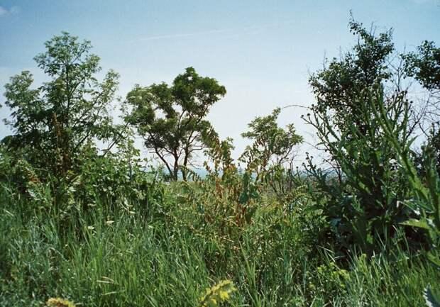 Почти африканский пейзаж на месте прошлогоднего раскопа