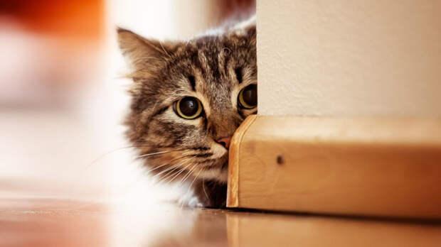 Спрятать провода от кошки можно под плинтус