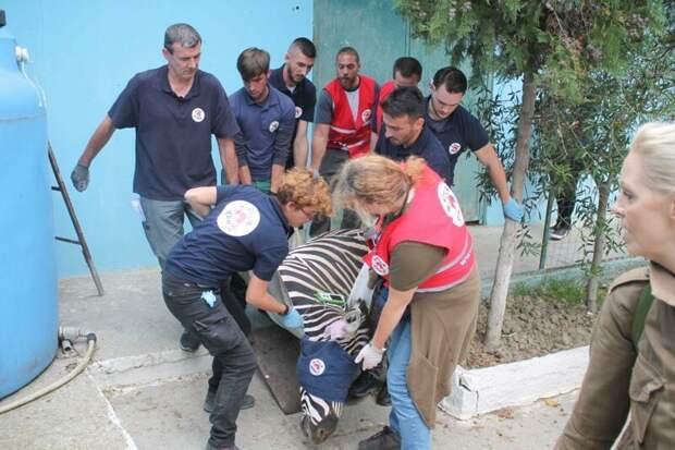 Животные албанского зоопарка страдали от голода и антисанитарии Four Paws, Албания, животные, зоопарк, организация, спасение, фото