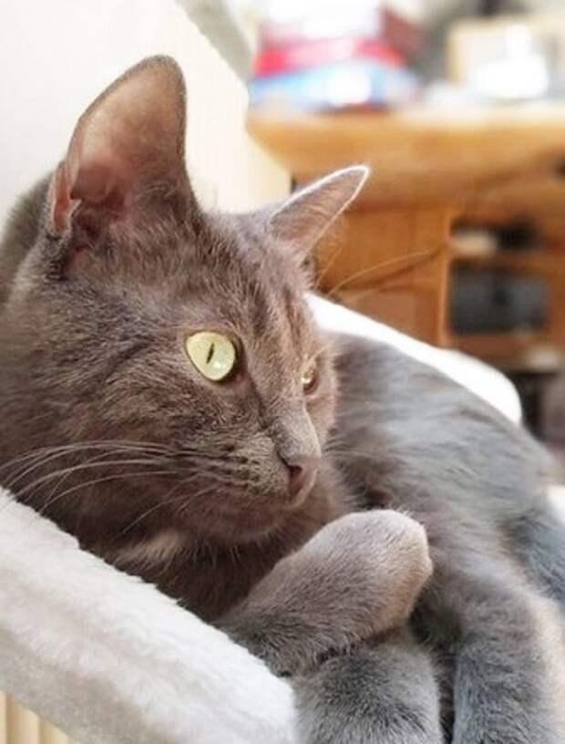 Приютский кот оказался слишком активным, и это повлияло на его здоровье. Впрочем, он все равно остался жизнелюбом