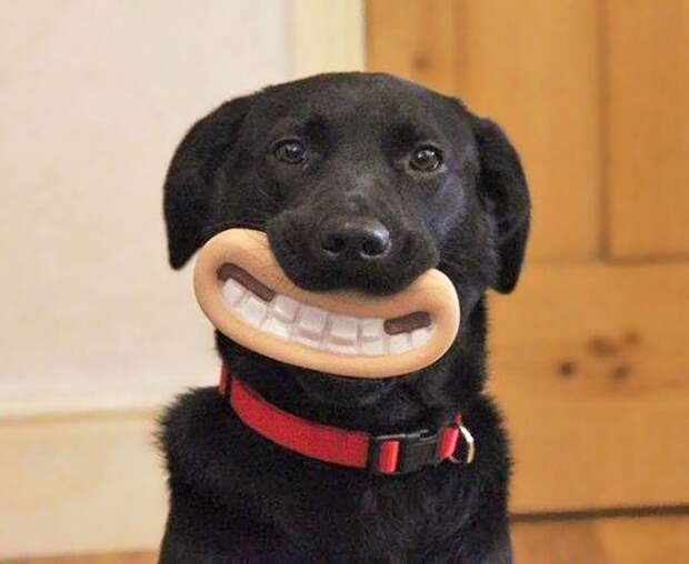 20 собак, которые не подозревают о том, насколько глупо выглядят со своими игрушками