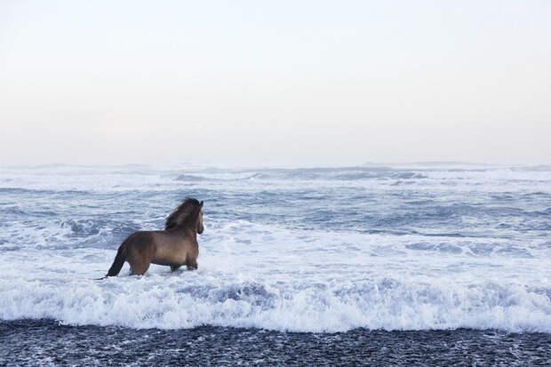 Невероятно красивые фотографии лошадей среди мистических исландских пейзажей