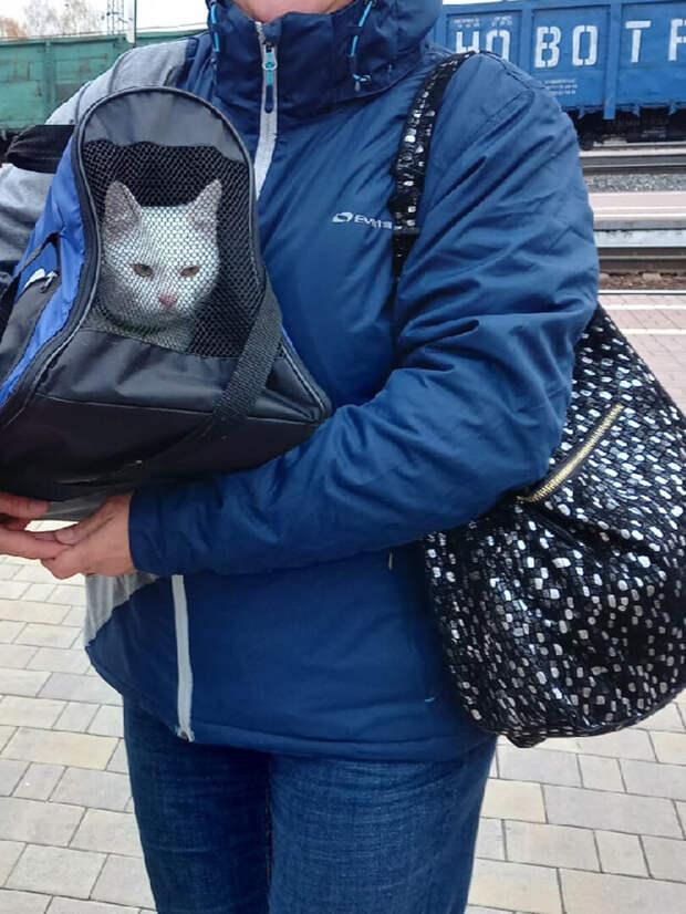 Курортный кот рисковал быть брошенным на виноградниках. Но, к счастью, его спасли отдыхающие, теперь у кота московская прописка