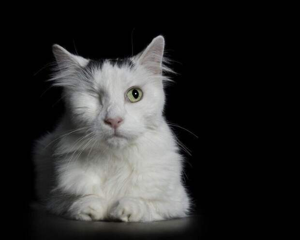 Потрясающие портреты животных с ограниченными возможностями