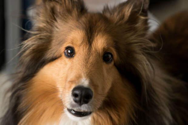 Ночью могло случиться непоправимое, но умная собака знала, что делать
