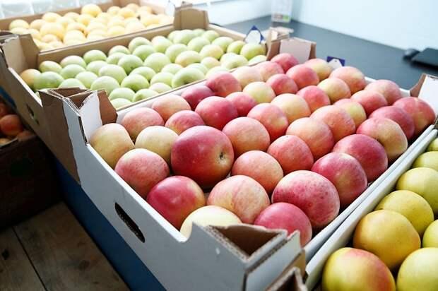 На Кубани завершают реконструкцию комплекса по переработке овощей и фруктов