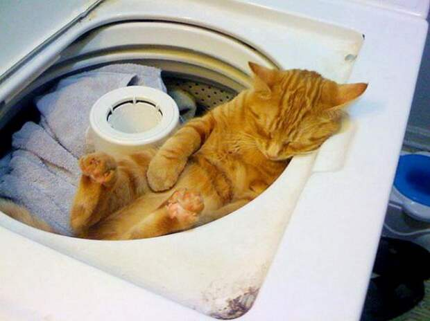 Удобства пост: 17 котов, которые умудрились заснуть в самых неожиданных местах!