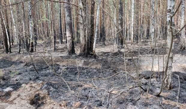 Как борются слесными пожарами вТюменской области инасколько это эффективно