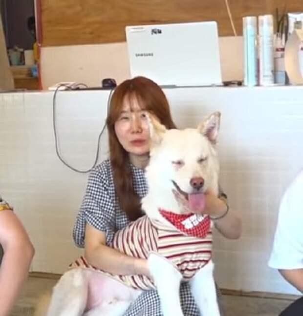 Пес и хозяйка