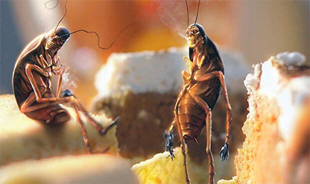 ПАМЯТКА. Бой с тараканами