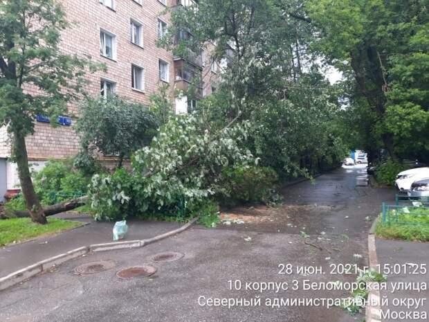 В Левобережном из-за ветра обрушилось три дерева