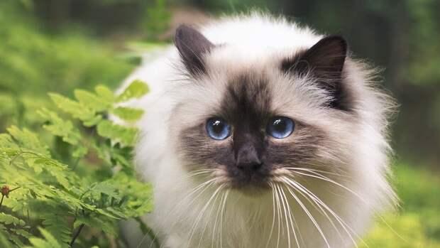 5 кошек, которые преданы своему хозяину не меньше, чем собаки