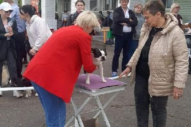"""В Тамбове прошла выставка собак  """"Весенняя Заря"""""""