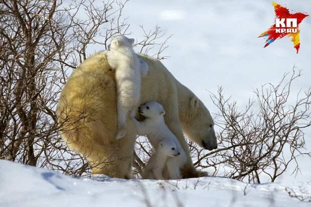 "Эрик Бассега. ""Белая медведица с медвежатами"". Фото: предоставлено организаторами"