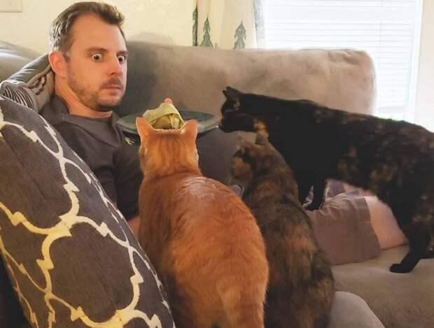 «Никакого давления на хозяина!» 10 эмоциональных фото котиков