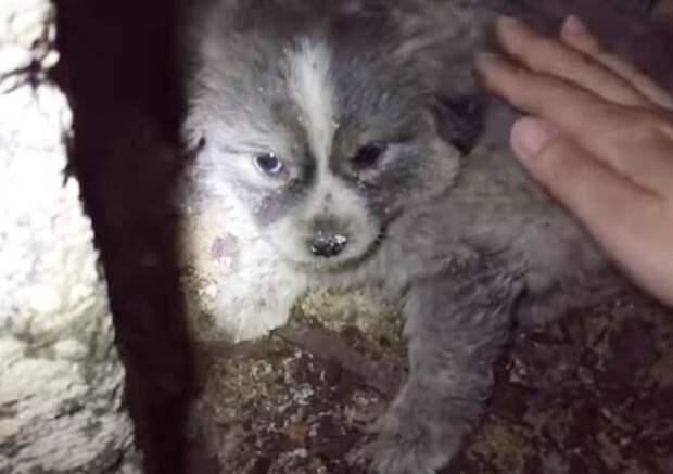 Испугавшись звуков петарды, маленький щенок бросился в темный туннель и заблудился