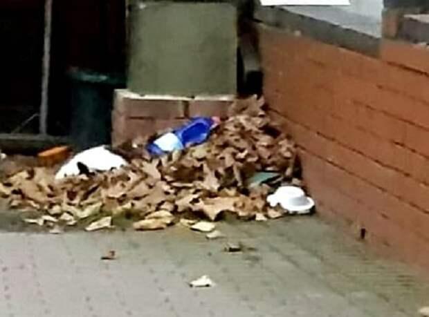 Кошка в мусоре