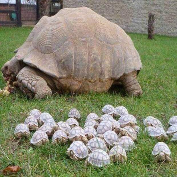 12 доказательств, что природа любит размер побольше