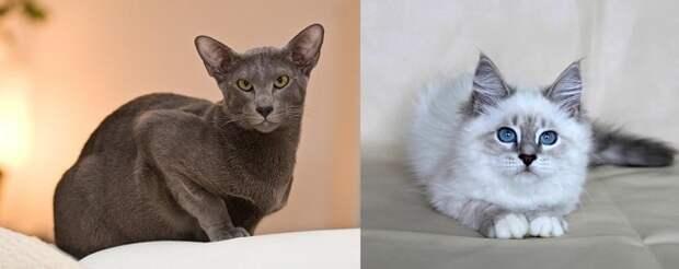 Котик под знак Зодиака: подбираем подарок для каждого представителя гороскопа