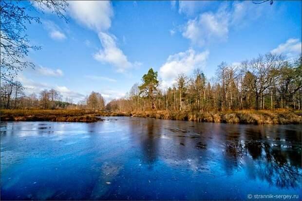 Замерзшая реки среди деревьев поздней осенью в ноябре