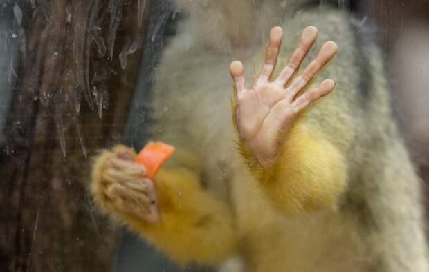 Бороздки на пальцах обеспечили человеку эволюционное преимущество