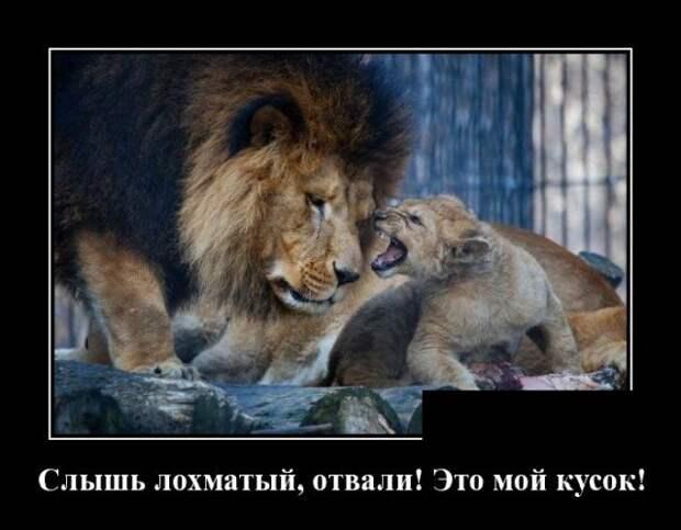 Демотиватор про львов