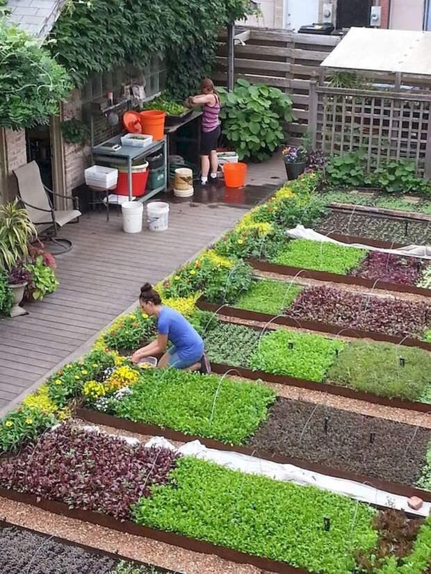 Оригинальные идеи дизайна огорода для начинающих