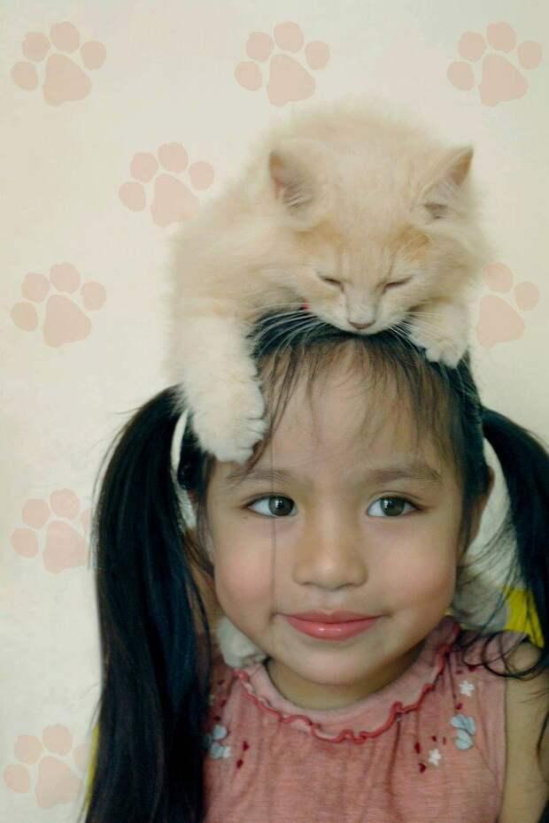 4. Такой вариант шапки подойдет и взрослым, и детям Популярность, животные, идея, интернет, кот, фото, шапка