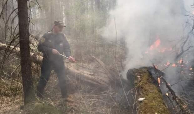 Налесные пожары вТюменской области вертолёты засутки вылили 150 тонн воды