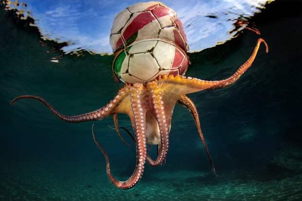 17 фотографий победителей фотоконкурса Underwater Photographer of the Year